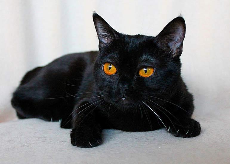 ранней картинки кошек черного окраса ясно, что